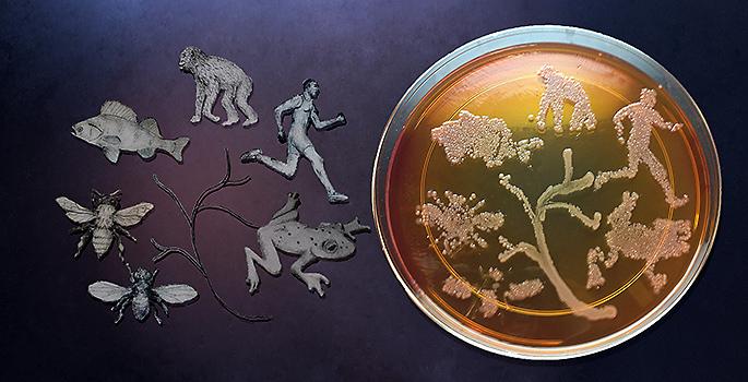 598_20130715165700-bacteriatree685