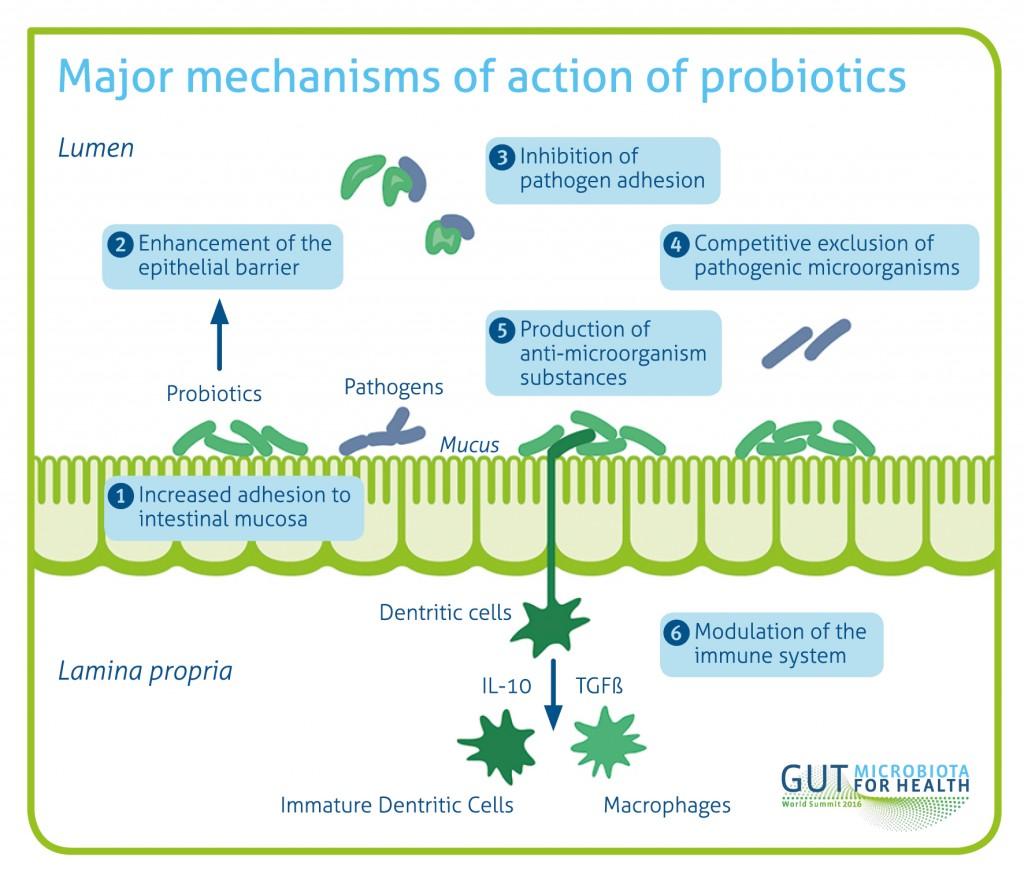 MicroB_graphic_probiotics_RGB_300dpi