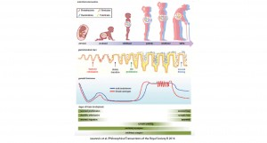 Development and maturation of the gut-brain