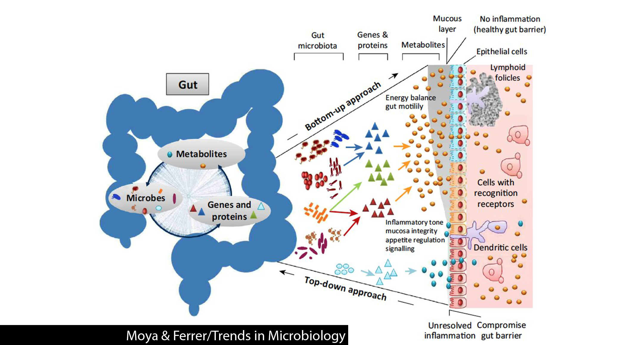 Is our gut microbiome stable or ever-changing? - Gut Microbiota ...