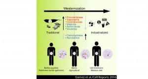 impact_lifestyle_diet_gut_microbiota