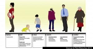 role_probiotics_ageing_longevity