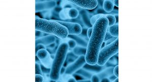 Mechanism of probiotic action in healthy individuals still unsettled v