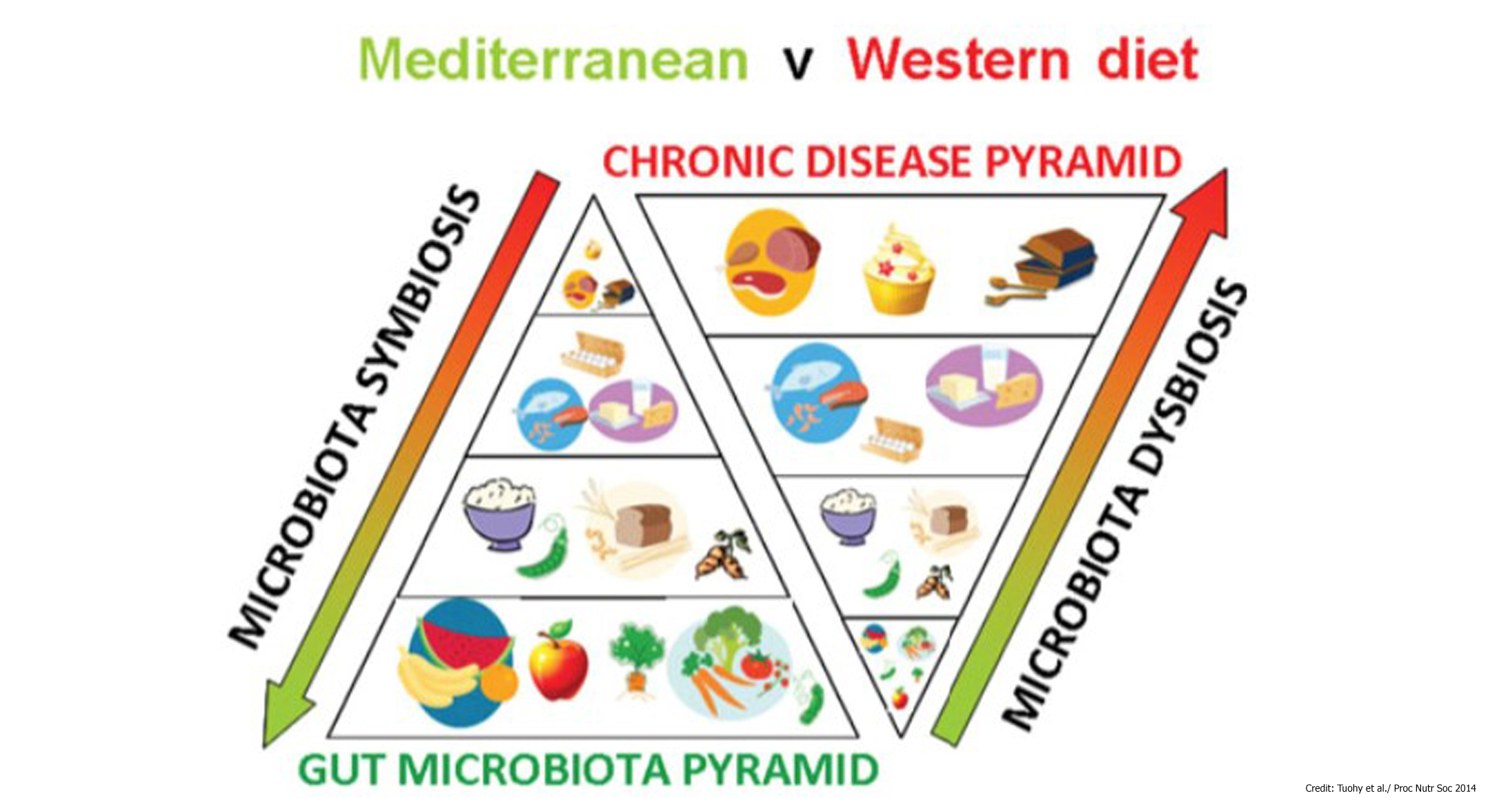 an analysis of the gut issues made by human diet A review of metabolic potential of human gut microbiome in human nutrition  analysis of human gut microbial  key issues in human fecal.