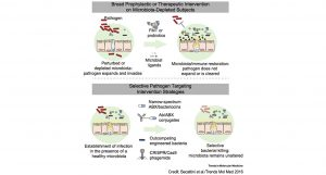Potential strategies to prevent the adverse effects of antibiotics on the gut microbiota