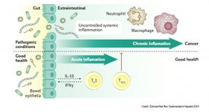 The role of gut microbiota in host responses to cancer immunotherapy