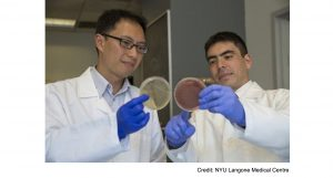 Intestinal parasites could help minimize pro-inflammatory bacterial