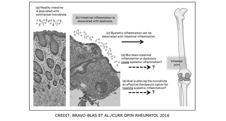 Xifaxan dysbiosis, Széles spektrumú parazita szer, Belső Parazita Elleni Szerek