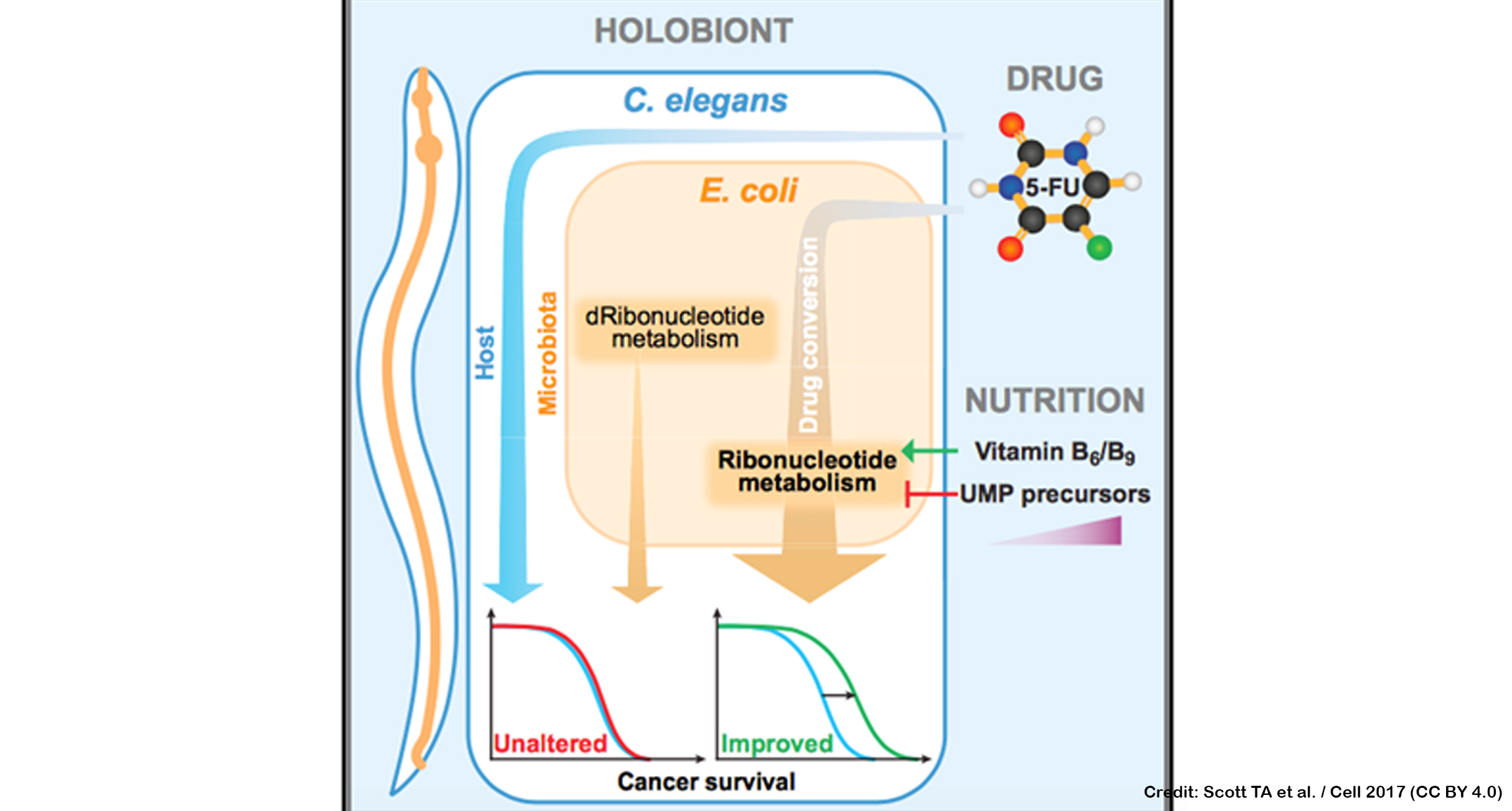 New insights on how the microbiome may dictate the efficacy