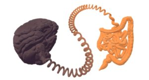 A new enteroendocrine cell type mediates how gut and brain exchange signals from nutrients