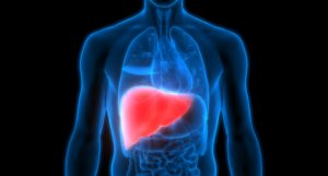 Consuming refined fermentable fibers could have a negative impact on your liver health, a new study reveals