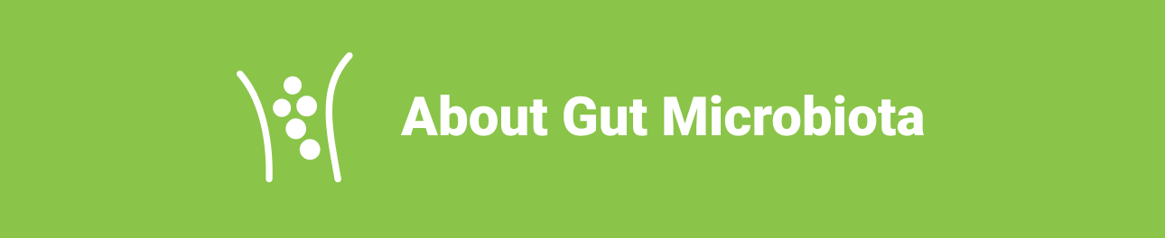 About Gut Microbiota
