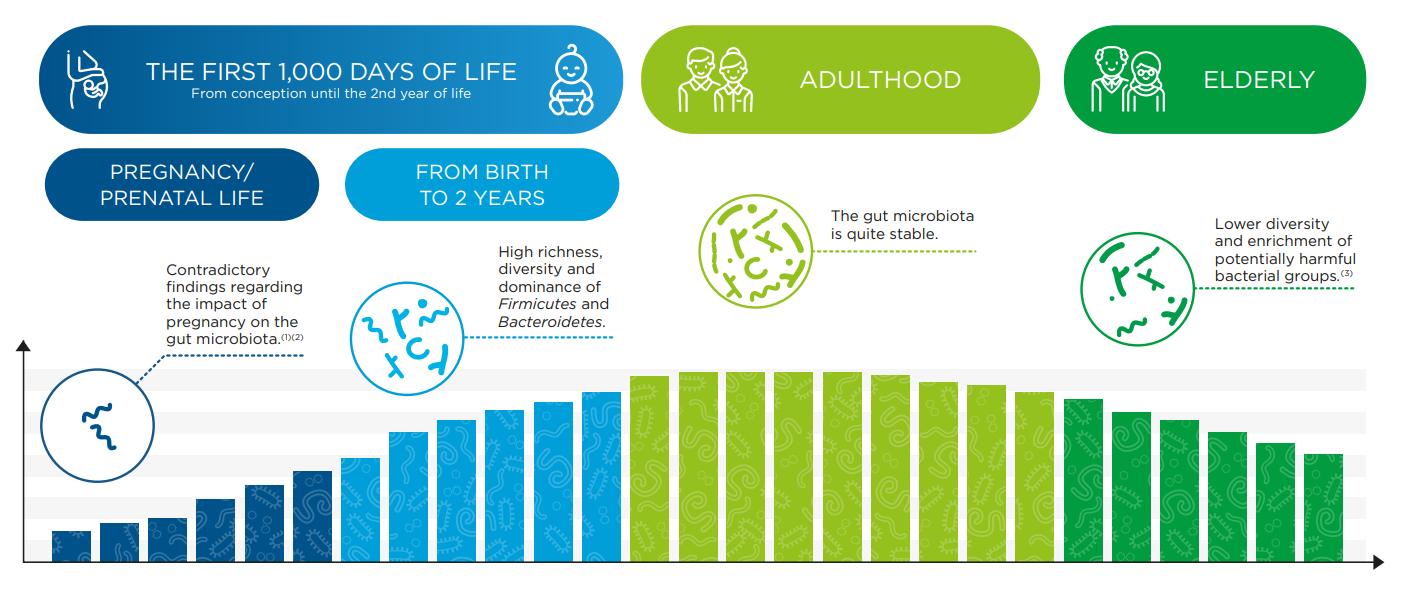 How does the gut microbiota evolve?
